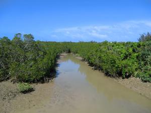 mangroobe.jpg