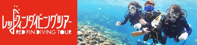 沖縄ダイビングならレッドフィン