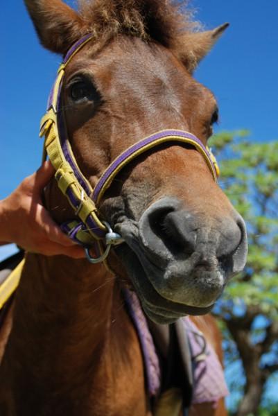 与那国島にある「ヨナグニウマふれあい広場」で乗馬体験!