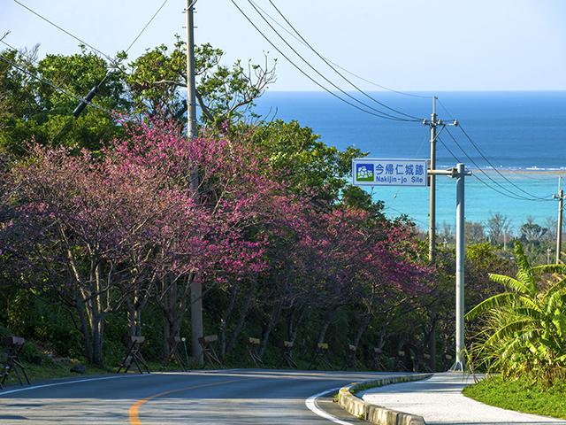 沖縄の花見