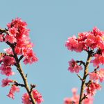 沖縄は4月がおすすめ