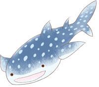 ジンベイザメのイラスト